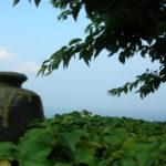 陶芸家:井上昌久の風籟窯(ふうらいがま)での作品のサイトです